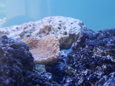 Coral in tank
